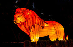 The colorful Lion in night time. Royalty Free Stock Photography