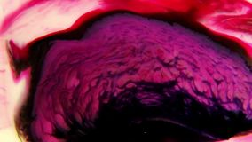 Colorful liquids mixed together to an abstract painting stock video footage