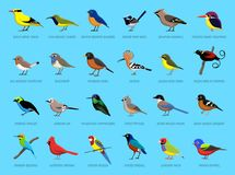 Colorful Little Birds Side View Cartoon Vector Illustration Royalty Free Stock Image