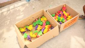 Colorful little chickens in a box in a shopping place of the city of Manila. Philippines. Colorful little chickens in a box in a shopping place of the city of Royalty Free Stock Photo
