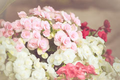 Colorful little flower blossom in garden with vintage retro tone Royalty Free Stock Image