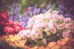 Colorful little flower blossom in garden with vintage retro tone Royalty Free Stock Images