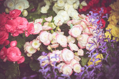 Colorful little flower blossom in garden with vintage retro tone Stock Images