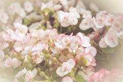 Colorful little flower blossom in garden with vintage retro tone Royalty Free Stock Photos
