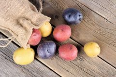 Colorful little potatoes spilling from burlap bag on rustic wood Stock Images