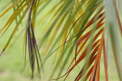 Colorful long leaves Royalty Free Stock Image