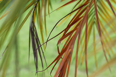 Colorful long leaves Royalty Free Stock Photography