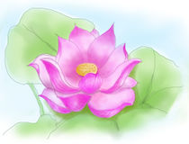 Colorful Lotus Royalty Free Stock Image