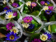Colorful lotus upon water. Colorful lotus upon plastic bag water stock image