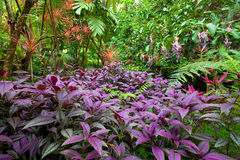 Colorful, lush tropical rain forest Royalty Free Stock Photos