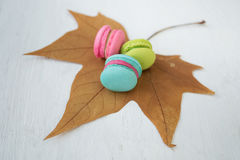 Colorful macaroon set on maple leaf with white wood background Royalty Free Stock Photos