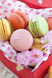 Colorful macaroons in red box Stock Image