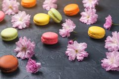 Colorful macaroons with spring sakura flowers on black backround Royalty Free Stock Image