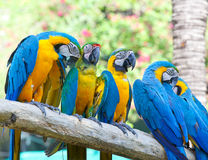 Colorful macaw Royalty Free Stock Photo
