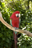 colorful macaw стоковая фотография rf