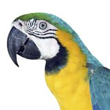 Colorful Macaw Royalty Free Stock Photos