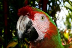 Colorful Macaw parrot close up. With green vegetation background Stock Photos