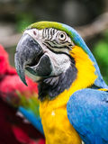 Colorful macaw parrot Royalty Free Stock Photo