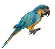 Colorful macaw parrot sitting on a wooden stick Royalty Free Stock Image