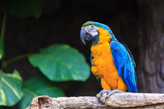 Colorful macaw parrots at zoo Royalty Free Stock Photo
