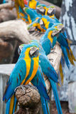 Colorful macaws. Beautiful colorful macaws sitting in a tree Royalty Free Stock Photography