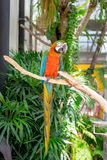 Colorful macaws bird. Sitting on branch of tree Royalty Free Stock Photos