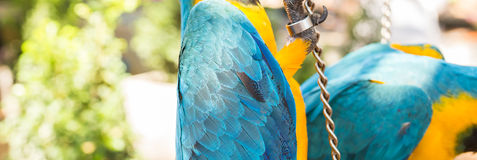 Colorful macaws in the park. Wild birds Royalty Free Stock Images