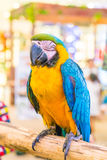 Colorful macaws. Sitting on log Stock Photos