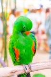 Colorful macaws. Sitting on log Stock Image