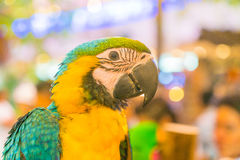 Colorful macaws. Sitting on log Royalty Free Stock Photos