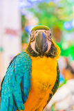 Colorful macaws. Sitting on log Royalty Free Stock Photography