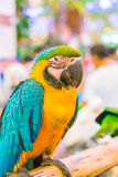 Colorful macaws. Sitting on log Royalty Free Stock Photo