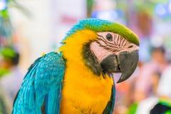 Colorful macaws Stock Photos
