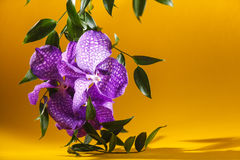 Colorful macro image of an orchid, the tropical flower. Royalty Free Stock Photo