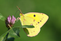 Colorful macro portrait of butterfly royalty free stock photos
