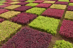 Colorful Madeira bushes Stock Image