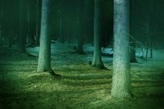 Colorful, magical fantasy themed fairytale-like landscape of a forest view. With some trees and ground. A quite​ simple photo is tuned with some colors and Royalty Free Stock Images