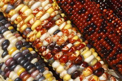 Colorful Maize Stock Photo