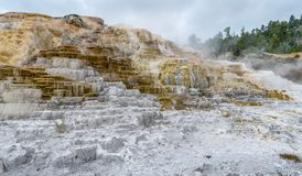 Colorful Mammoth Springs geothermal feature in Yellowstone NP stock photography
