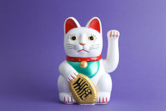 Colorful Maneki Nako. A Maneki-neko plastic cat, Symbolizing luck and wealth, on a pop and colorful background. Minimal color still life photography stock photos