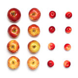 Colorful many red apples fruits in a row isolated on white bac Stock Image