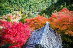 Arashiyama. Colorful of maple forest on the mountain at autumn season in Arashiyama, Kyoto, Japan. From observation view point at Senkoji temple, over hozu river royalty free stock photos