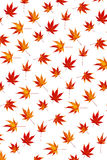 Colorful maple leaf abstract. Maple leaves turning colour background abstract Stock Image