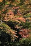 Colorful maple leaf background in autumn, Osaka Japan. A Colorful maple leaf background in autumn, Osaka Japan Stock Photo