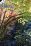 Colorful maple leaf background in autumn, Osaka. A Colorful maple leaf background in autumn, Osaka Japan Stock Photography