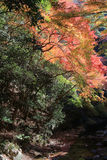Colorful maple leaf background in autumn, Osaka Japan. A Colorful maple leaf background in autumn, Osaka Japan Stock Images