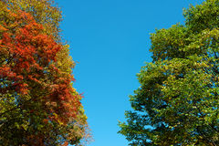 Colorful maple leaf and sky Stock Images