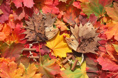 Colorful maple leaves. With funny hedgehog figures Royalty Free Stock Photos