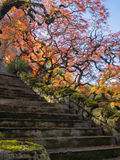 Colorful maple leaves along a flight of stairs Royalty Free Stock Photos