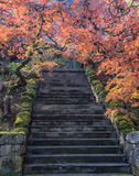 Colorful maple leaves along a flight of stairs. Yellow, orange and red leaves on ornate, curved Japanese Maples trees decorate a flight of stone stairs during Royalty Free Stock Image